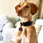 Mavie - Bürohund